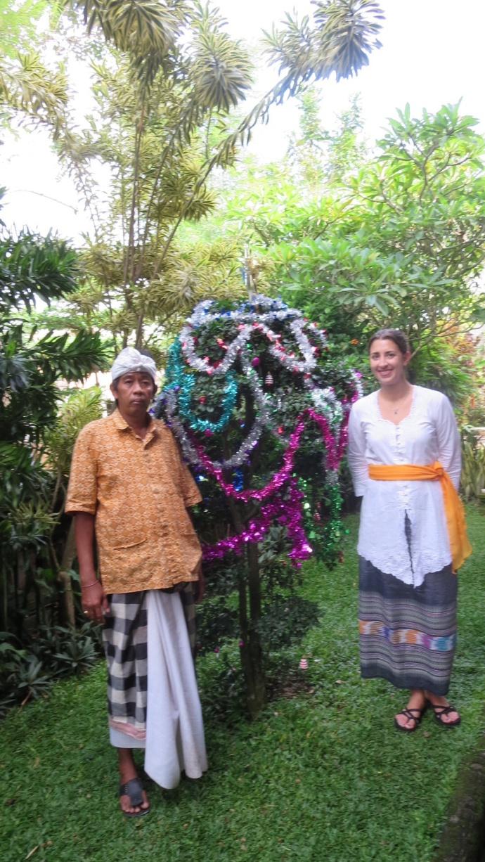 Bali Xmas bush